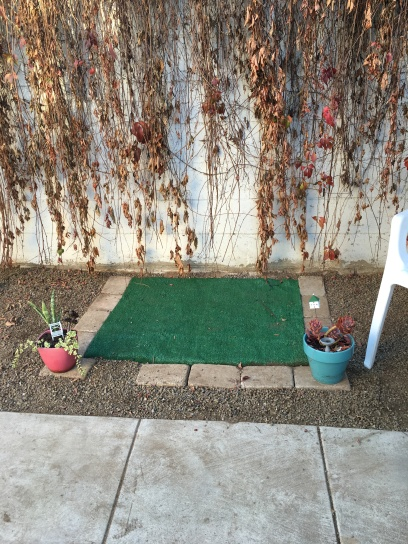 The dog's pee area! They don't go on the fake grass tho...