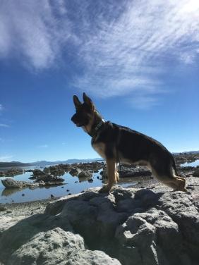 Mono Lake!